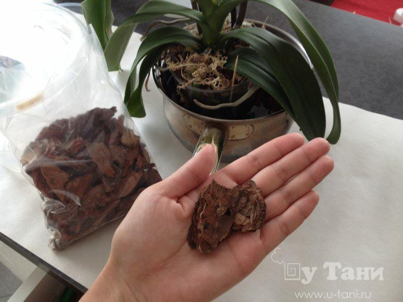 Субстрат для орхидеи своими руками 125